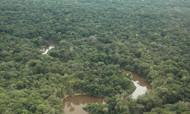ONU aponta povos indígenas como melhores guardiões das florestas da América Latina