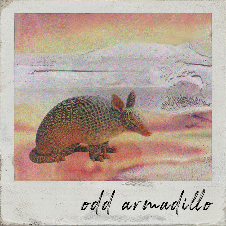 odd armadillo polaroid.jpg