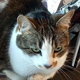 katniss_thumbnail.jpg