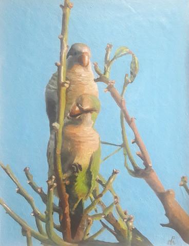 """""""Loros sobre el árbol"""""""