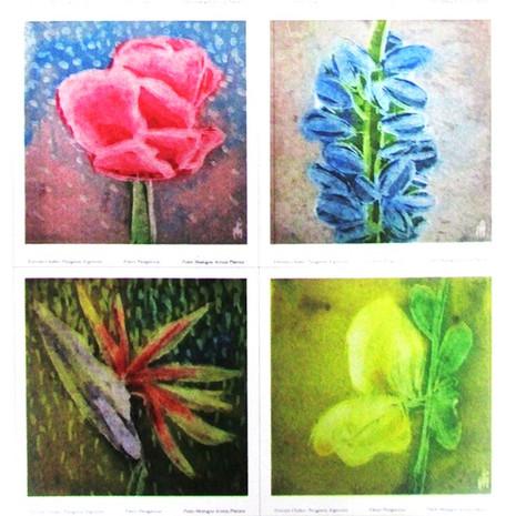 Flores Patagónicas III