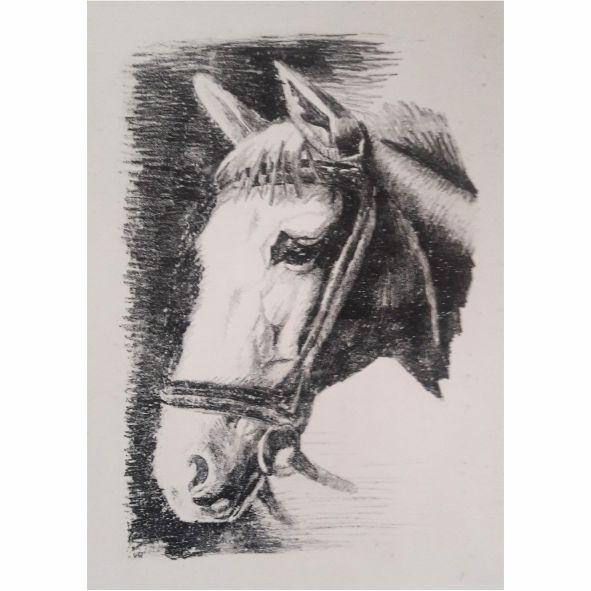 Serie caballos IV