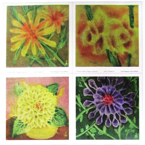 Flores Patagónicas VI