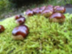 autumn-470446_960_720.jpg