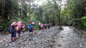 Journey in the heart of Mindoro to assess a remote Tamaraw population (February 1 – 13)