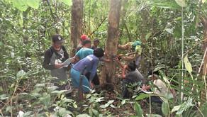 Assessing the status of the residual Tamaraw population in the Aruyan-Malati area, O. Mindoro