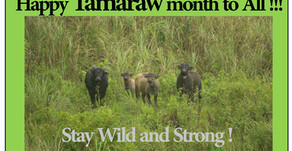 This is Tamaraw Month!