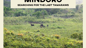 Searching for the Last Tamaraw – Movie documentary