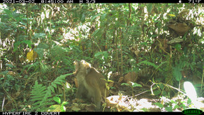 Our camera trap survey continues to reveal wildlife of the Aruya Malati Area in Occidental Mindoro