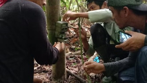 Camera trap project in Siburan forest in Aruyan-Malati area, a critical habitat (July 2020)