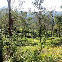 mangyan land-use type.JPG