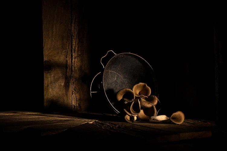 32-Oyster Mushrooms v1(3238)-C.jpg