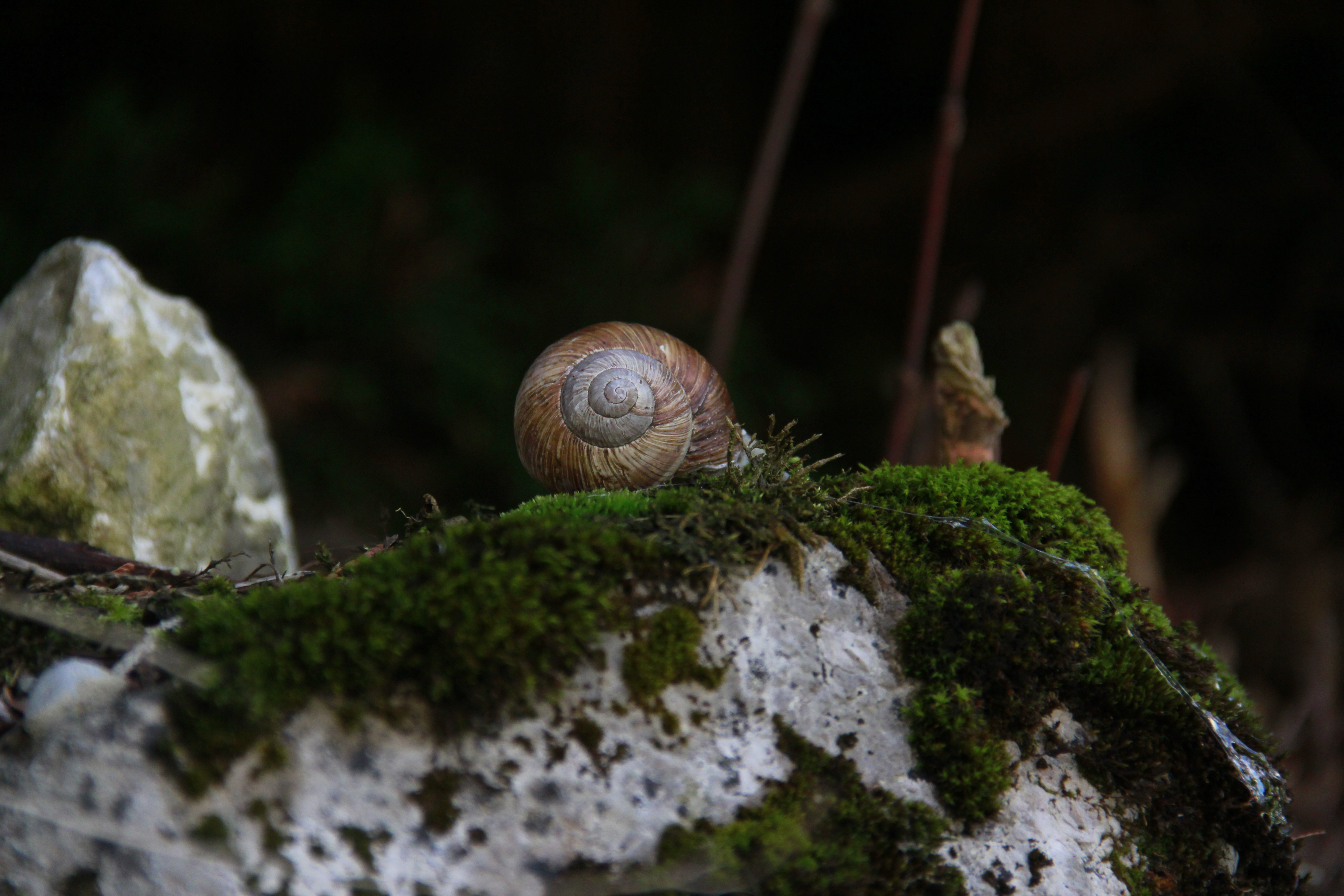Le pays des escargots, Suisse'14
