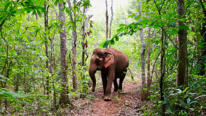 The Elephant Valley Project