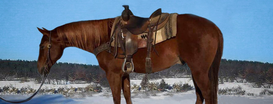 LIMITED EDITION CHEX - 2010 AQHA GELDING-Sells Feb. 4th Five Star Horse Sale