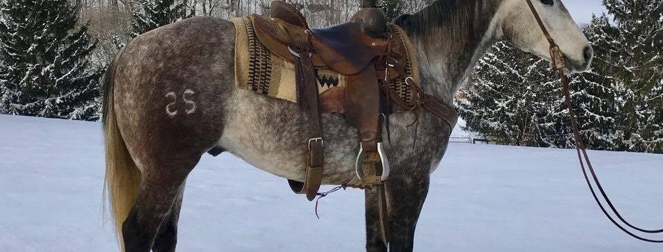 SS Mitos Genuine Ace- 2012 AQHA Gelding-Sells Feb. 4th Five Star Horse Sale