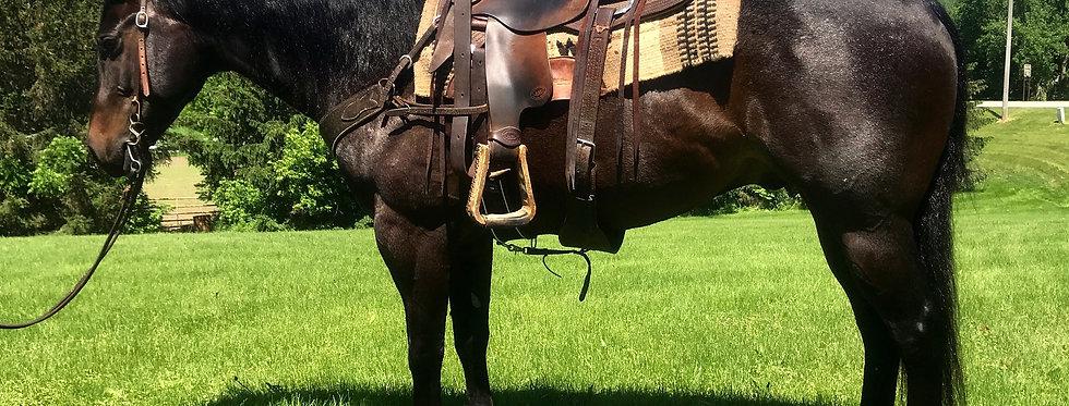 Mr Chucks Bobo-2012 Blue Roan Gelding *Sells June 23rd @ Billings Livestock
