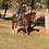Thumbnail: CAT BELOU- 2012 AQHA Gelding* Sells @ 5 Star Horse Sale Feb.3