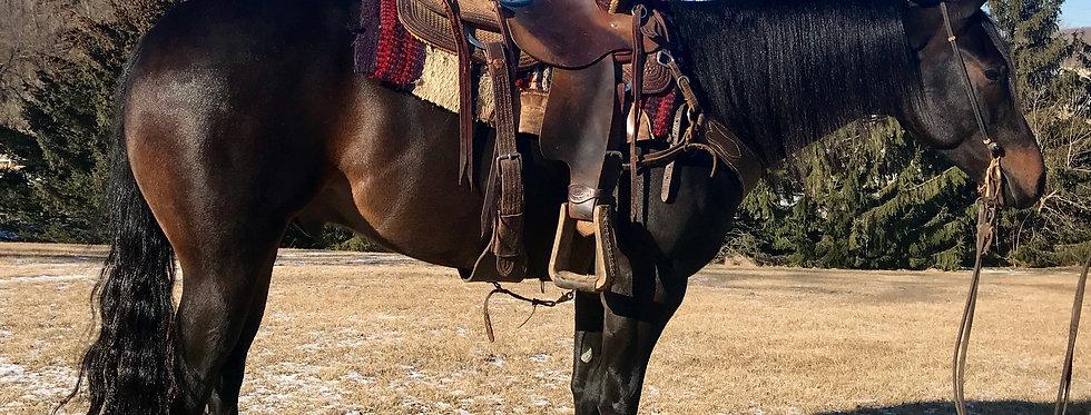 PQH BIG BANG THEORY -2014 AQHA BAY GELDING* Sells @Billings Livestok Horse Sale