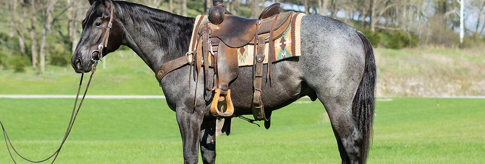 POCO BLUE KROS- 2017 AQHA Blue Roan Stallion