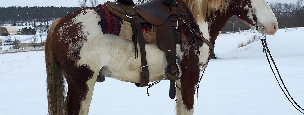 Flash - 5 Year Old Paint Quarter Pony Cross