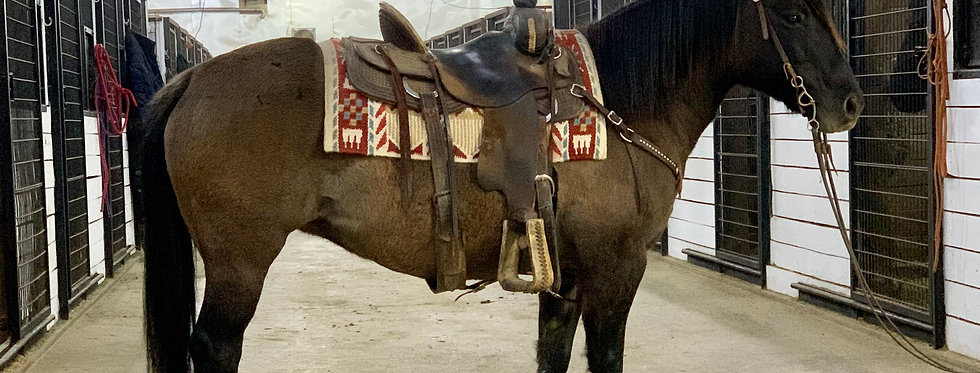 Bonnie - 2008 Grulla Quarter/Pony Mare