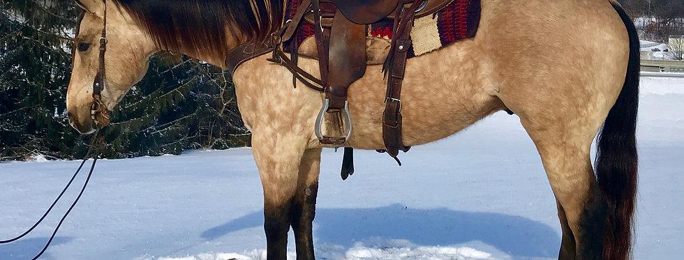 RM MR STAR BAR -2013 AQHA BUCKSKIN GELDING**Sells@Billings Livestock Sale Feb.24