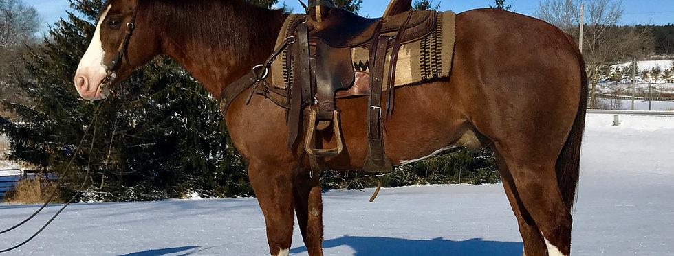 SHINING PEPPER - 2006 AQHA SORREL GELDING**Sells Feb.24 @Billings Livestock Sale
