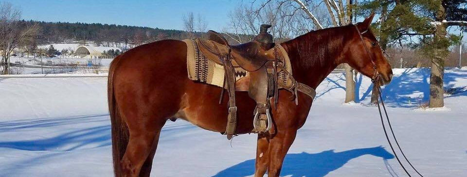 KT SNAPPIN FRECKLES-2014 AQHA Sorrel Gelding-Sells Feb.25 Billings Livestock