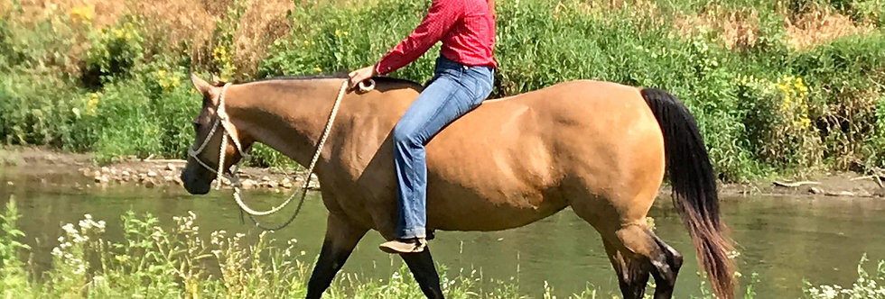 RUMBALINA SQUALL-2010 BUCKSKIN MARE AQHA HIP #30 LEAGUE OF LEGENDS HORSE SALE