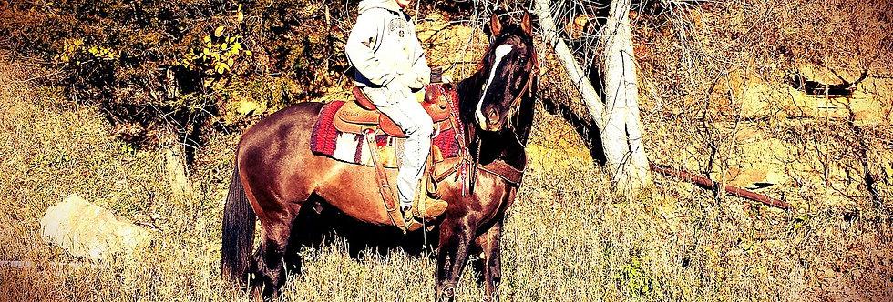 RJC PERTY GENUINE - 2009 AQHA Grulla Gelding