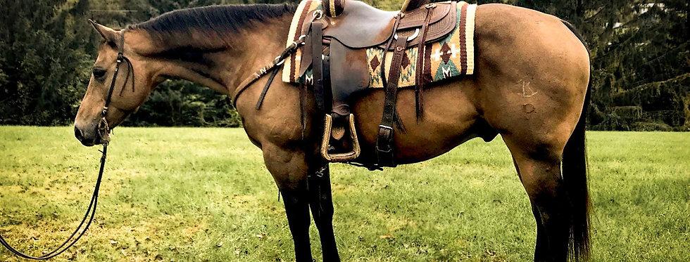 WR WHISKEY SIX-2008 AQHA Buckskin Gelding #54 @Diamonds in the Desert Horse Sale