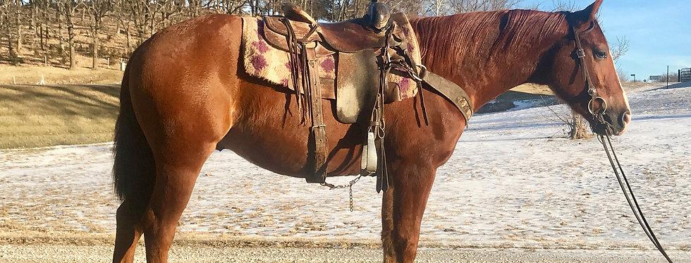 CHROMED SMOKE-2015 AQHA Gelding*Sells @ Billings Livestock Horse Sale Jan 27