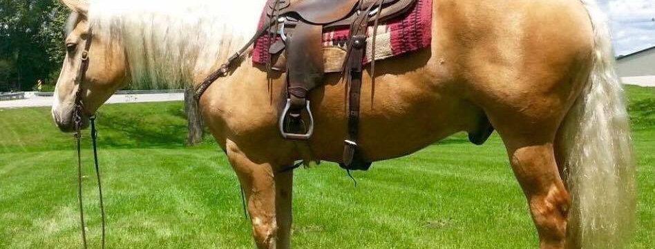 BUD- 8 Year Old Belgian Quarter Horse Cross-Sells April 22nd @ BLS