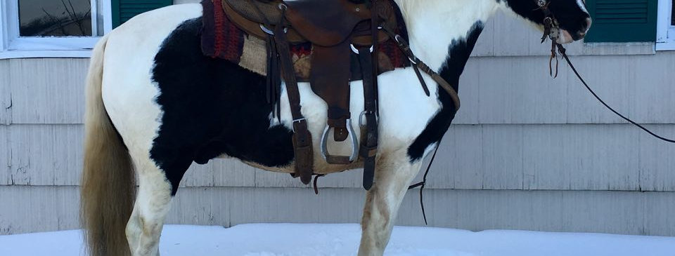 Highway - 10 Year Old Paint Pony Cross