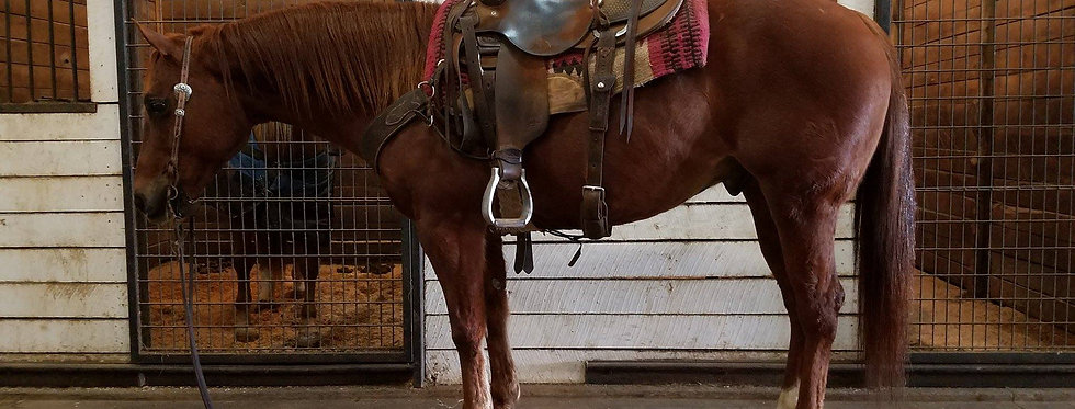 LM WHIZABLE I MAN- 2009 AQHA GELDING--Sells Feb. 4th Five Star Horse Sale