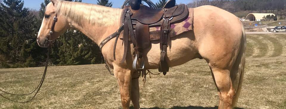LEGENDS TWO EYED JAC-2014 AQHA Palomino Gelding - Sells April 22nd @ BLS