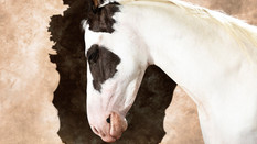 Horses 03.jpg