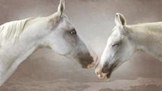 Horses 06.jpg