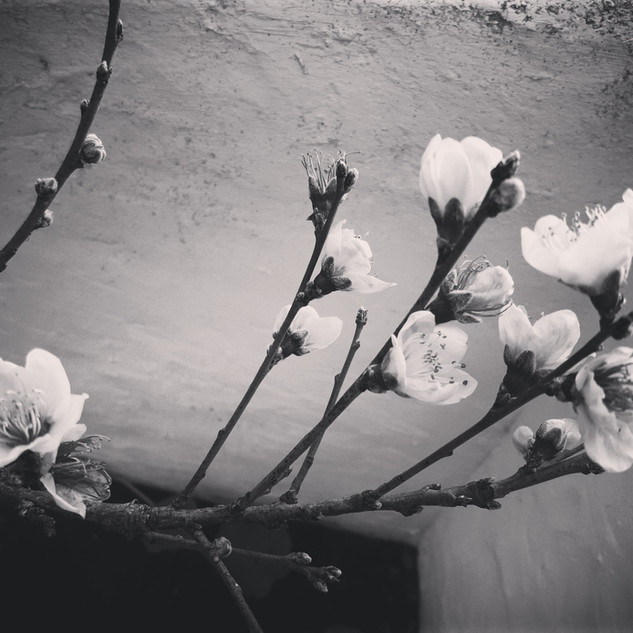 -FLOWERS-