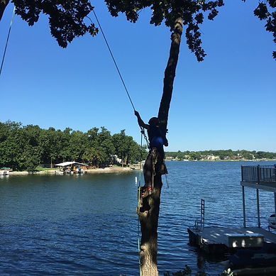 Shoreline tree removal