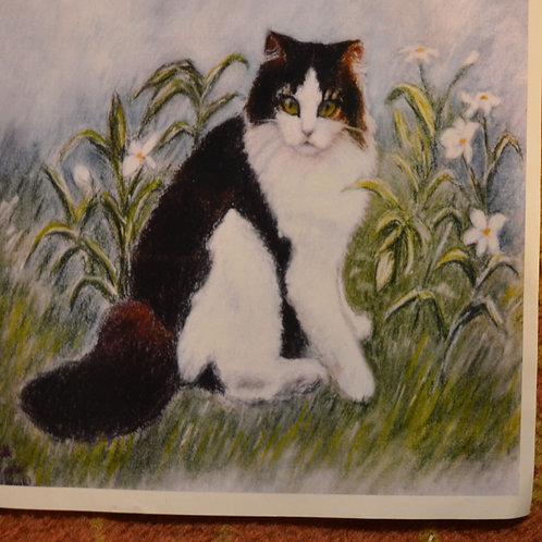 Black n White Cat 16x16