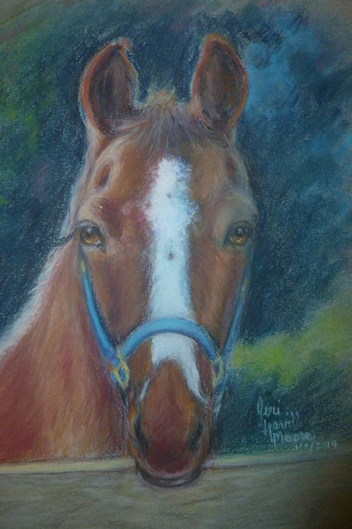 Chestnut Horse  16x22