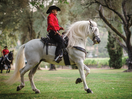 Dancing Horses - To Help Napa County's Hungry at Hands Across the Valley