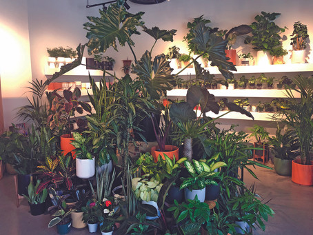 Yes. You Can Grow Indoor Plants