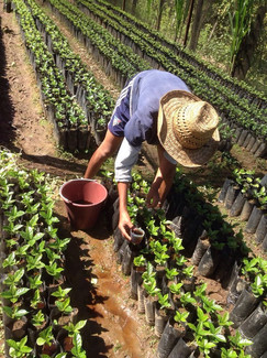seedling_nursery_in_sochipam.jpg