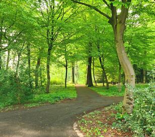 Maifrischer Wald in Dortmund Bövinghausen
