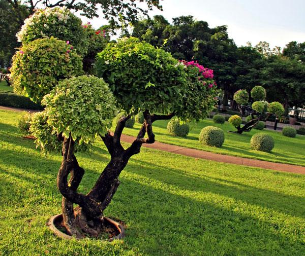 amenagement-jardin (1).jpg