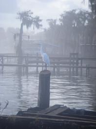 Egret on pole in Lake Verret