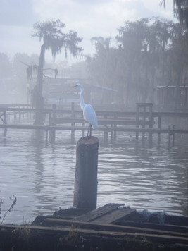 Egret on pole in Lake Verret